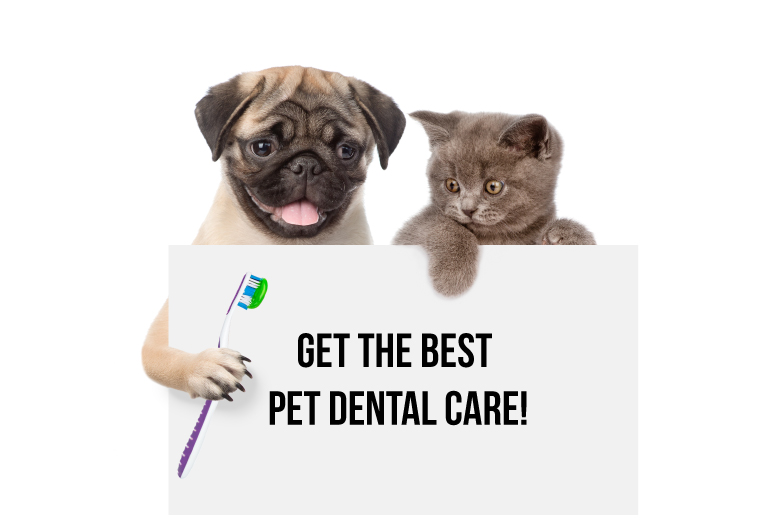 Pet Dental Care Dwarka Dental Scaling For Dogs In Dwarka