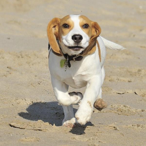 6 best dog breeds for children pet care hospital india - Best dog breeds kids ...