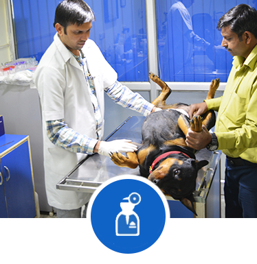 pet-blood-test-in-dwarka